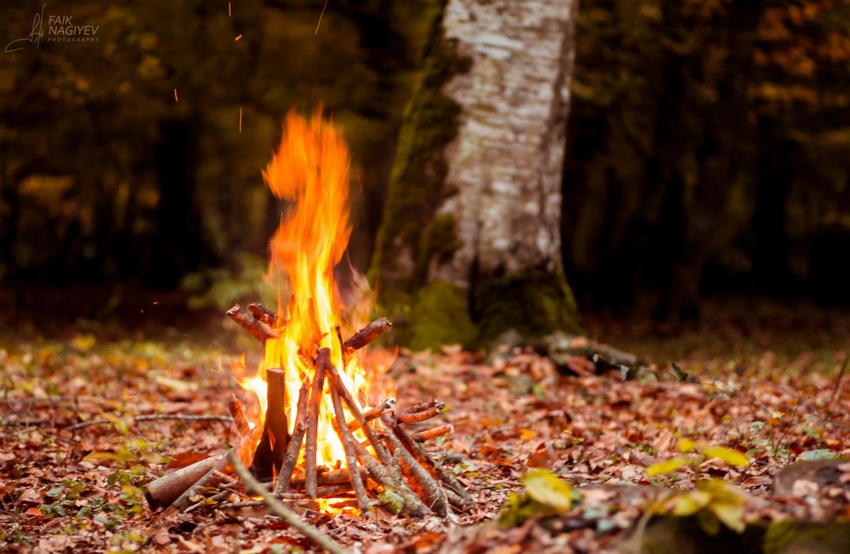 Памятка о правилах пожарной безопасности в лесу в осенний период